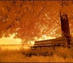 «Ветер разносит осеннюю трель»