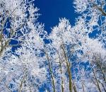 Красота зимнего леса в поэзии фрунзенца