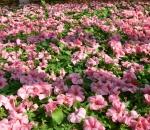 «Фрунзе-Флора» готовится украсить предприятие цветами