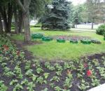 Заводські клумби заграють новими квітковими барвами