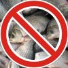 Почала діяти заборона на риболовлю